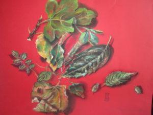 chute de feuilles (1)
